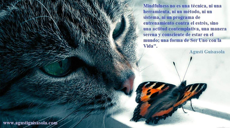 MIndfulness Gato